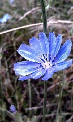 Beautiful purple color wild flower