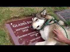 Heartbroken Loyal Dog Cries on Owners Grave - YouTube