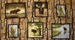 Wild in the Wilderness Picture Frame Panel - 1251