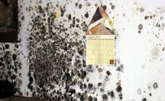 How to Get Rid of Mold? Molds are basically different types of fungi that grow in filaments. They reproduce by forming spores. They are the basic cause of nuisance. They can ...
