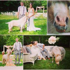 Cow, Photography, Animals, Photograph, Animales, Animaux, Photo Shoot, Animal, Animais