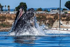 Off shore at Capitola, CA Whale Watching, Creatures, California, Water, Animals, Activities, God, Live, Photography