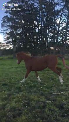 Most Beautiful Horses, Pretty Horses, Horse Love, Animals Beautiful, Cute Wild Animals, Cute Little Animals, Cute Funny Animals, Animals And Pets, Funny Horse Videos