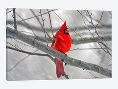 "Cardinal Bird Canvas Print 60"" L x 40"" H x 1.50"" D - eWallArt"