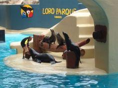 Loro Park Seals