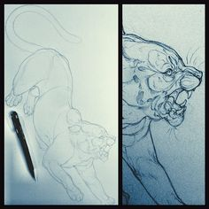 When you don't have enough hours in the day, you have to make productive work days out of nights I guess? #nakedtiger