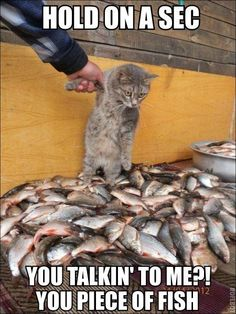 Say Meaw One More Time, I Dare You!