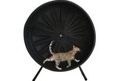 Pet Wheels The perfect product for yourcat,small dogor small pet to use forexercise,anxiety, weight loss, or fun!