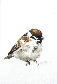 Sparrow Study # 7