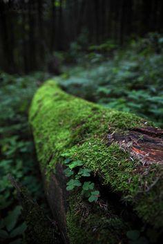 Feather & Moss Curiosities, oivm: Source