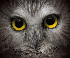 Wildlife Protection Photography - Google Search
