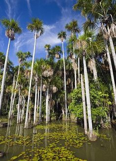 Green Route - discover the Amazon / Peru