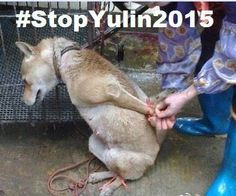 "GRAPHIC ""@nanvazsoto: Pls RT Don't Ignore @posterpixuk @pupaid   #StopYuLin2015  #Anons4Dogs "" #IHATEPEOPLE"