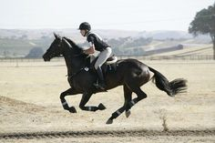 Galloping hard and fast .. 3 day eventing