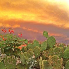 Los colores del atardecer en #Hermosillo, estado de #Sonora, al norte de #Mexico. Los misterios del desierto con todos sus encantos.