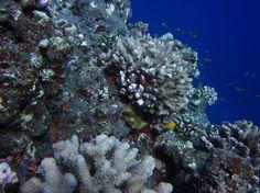 undersea vent scenery - Google 검색
