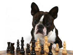 """. """"I feel as if I were a piece in a game of chess, when my opponent says of it: That piece cannot be moved."""""""