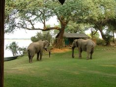 Chongwe River Camp, Zambia, Africa