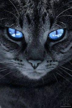 Tender zwart poesjetiener ameture pussy