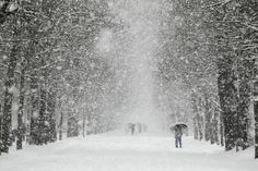 A man walks through a park in Burgos as snow hits northern Spain, on February 5, 2012. The Arctic cold snap that has hit Europe for over a week had claimed nearly 300 lives today, brought air travel chaos to London and dumped snow as far south as Rome and even North Africa.