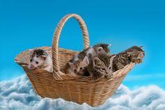 Basket full of kitten-cuteness by hoschie.deviantart.com on @DeviantArt