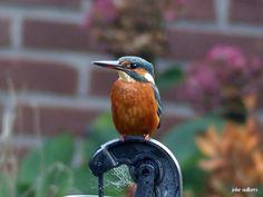 Foto uit de tuin van Oma joke #ijsvogel
