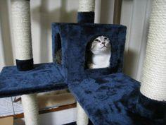 キャットタワーの中に入る猫 福松