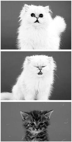 Ahhh Choo - so cute :) Baby Animals, Funny Animals, Cute Animals, Funny Cats, Crazy Cat Lady, Crazy Cats, Cat Sneezing, Pets 3, Cat Boarding