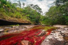 """CANO CRISTALES 1 Caño Cristales is a Colombian river located in the Serrania de la Macarena province of Meta. The river is commonly called """"The River of Five Colors"""" or """"The Liquid Rainbow"""". Liquid Rainbow, Rainbow River, Paraiso Natural, Reserva Natural, Voyager Loin, Parc National, Adventure Tours, Natural Wonders, Travel Around"""