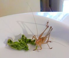 Playing Favourites Huntsman Spider, Types Of Insects, Hawk Moth, Little Birds, Crete, Great Recipes, Nature, Riddler, Small Birds