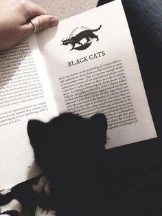 Black kitten reading about Black Cats.