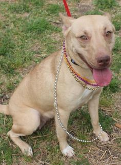 1000+ images about Strays at TX Shelters on Pinterest ...  Pearland