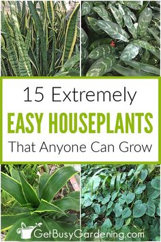 If you want easy indoor plants for your home, this list is for you! Any of these low-maintenance houseplants would be a perfect choice, even for beginners. Water Garden, Herb Garden, Gardening For Beginners, Gardening Tips, Amaryllis Plant, Easy Care Houseplants, Indoor Vegetable Gardening, Corn Plant, All About Plants
