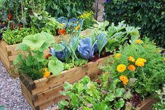 bigstock-Vegetable-garden-7485963.jpg (1600×1067)