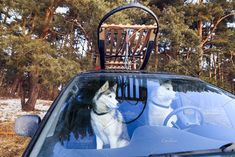 Dogs sled in the car, view through g by konstantin.tronin on @creativemarket