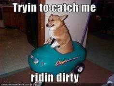 Ridin Dirty Funny Meme : ▷ roombacat ridin dirty pets ridin dirty cat