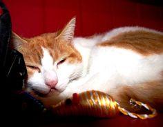 I'll sleep now. by Loreta Tavoraite on YouPic Canon, Sleep, Animals, Cannon, Animaux, Animales, Animal, Dieren