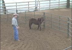 Video: Teaching Your Horse to Back Up at Liberty with Jonathan Field