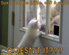 Funny Cat Pictures With Captions   Funny Pictures Funny Animals Funny Baby Funny Quotes Funny Wallpapers