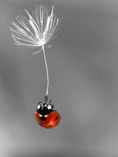 A lucky ladybug making a wish...<3