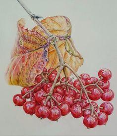 Схема вышивки «Красные ягоды» - Вышивка крестом