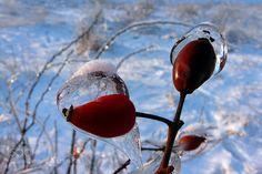 Beauty of Winter by StefanAndronache. @go4fotos