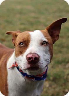 Lakeland Adopt Dog