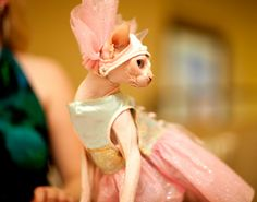 A Cat Lady's Dream: The Cat Fashion Show