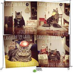 E falando em internautas fofos, não poderíamos deixar de mostrar pra vocês a página Cansei de ser gato!  Nela a publicitária Amanda Nori, dona do Chico Bento, posta diariamente fotos do gato com fantasias e cenários super criativos!   Vale a pena seguir e se divertir com as fotos do Chico!
