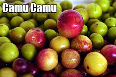 Dr Oz Camu Camu Health Benefits
