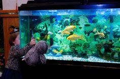 Fish Watching  - Pengo Penguin wants to watch too.