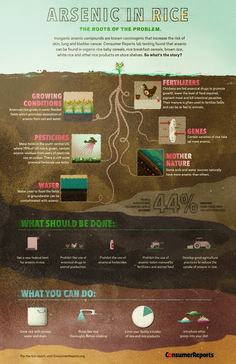 Arsenic In Rice #food #infographic