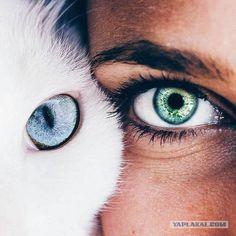 Eyes, cat, and blue image pretty eyes, beautiful eyes color, cool eyes Beautiful Eyes Color, Pretty Eyes, Cool Eyes, Beautiful Eyes Quotes, Eye Photography, Creative Photography, Animal Photography, Fashion Photography, Aesthetic Eyes