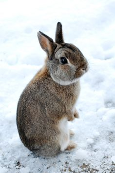 Sweet bunny in the snow ♡